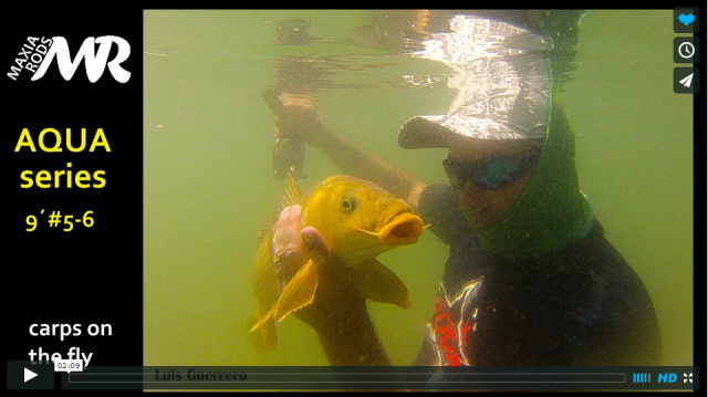 Carps on the fly VIDEO with Aqua series