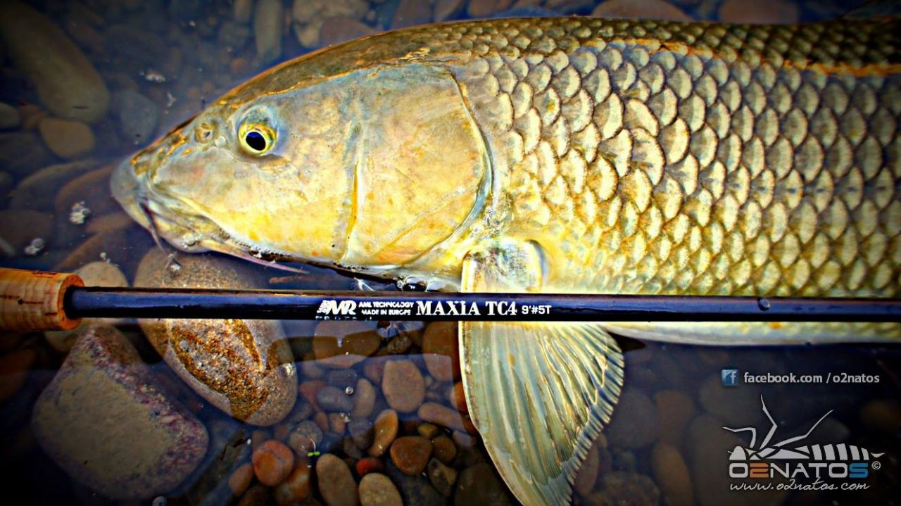 Barbel fly fishing in the spanish rivers blog maxia rods for Fishing rod in spanish