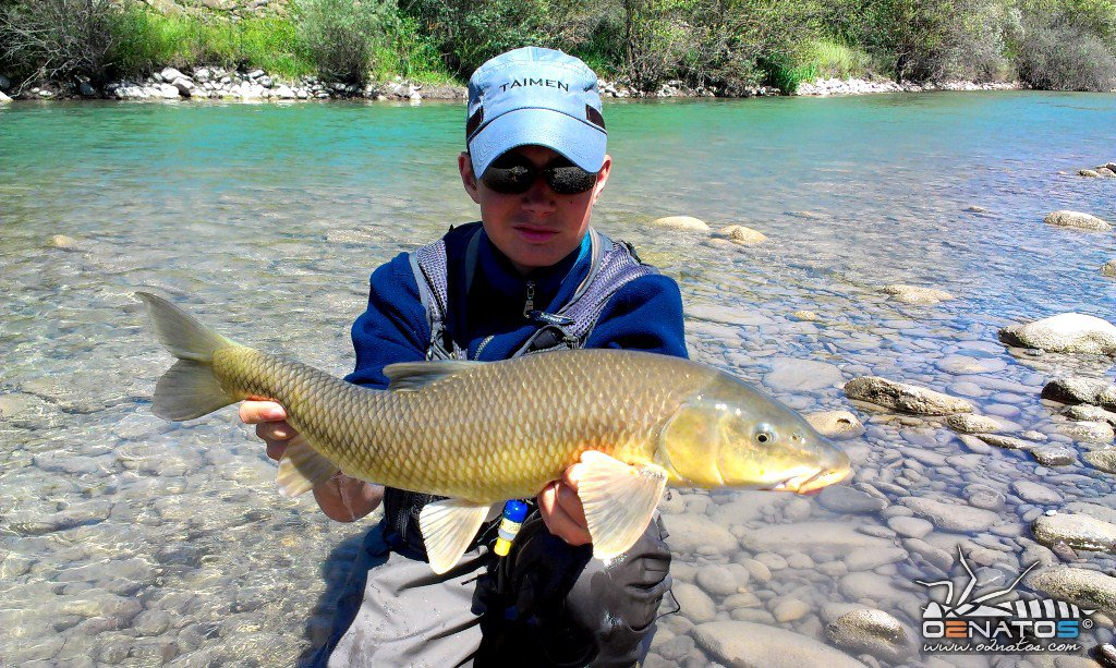Barbel fly fishing in the spanish rivers maxia channel for Fishing rod in spanish
